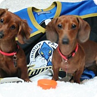 Adopt A Pet :: Chaser and Charlie - Sioux Falls, SD