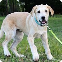 Adopt A Pet :: Kolby - Starkville, MS