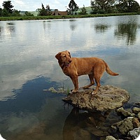 Adopt A Pet :: Polly #2 - Towson, MD