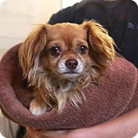 Adopt A Pet :: Eli - Marina del Rey, CA