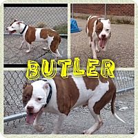 Adopt A Pet :: Butler - Garden City, MI