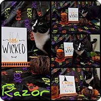 Adopt A Pet :: Razor - Akron, OH