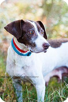 Pointer Mix Dog for adoption in Marietta, Georgia - Zingo
