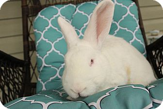 New Zealand Mix for adoption in Hillside, New Jersey - Paddington