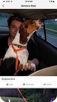 Beagle Mix Dog for adoption in Saddle Brook, New Jersey - Gina