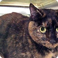 Domestic Shorthair Cat for adoption in Wildomar, California - 322650