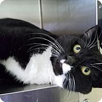 Adopt A Pet :: Player - Elyria, OH
