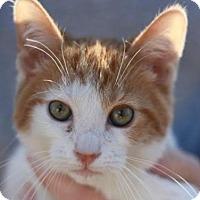 Adopt A Pet :: Kindle - MEET ME @ PETCO! - Cookeville, TN