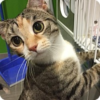 Adopt A Pet :: Evee - Herndon, VA