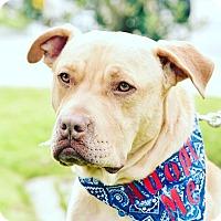 Adopt A Pet :: Thomas-ADOPT Me! - Redondo Beach, CA