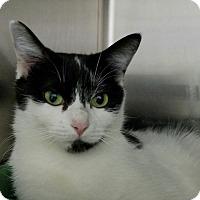 Adopt A Pet :: Ariel - Elyria, OH