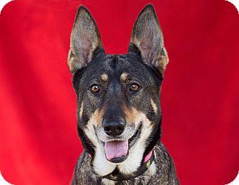 German Shepherd Dog Mix Dog for adption in Santa Monica, California - Panda