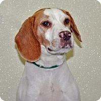 Adopt A Pet :: Marlowe - Port Washington, NY