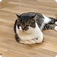 Adopt A Pet :: Homer - Monroe, GA
