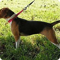 Adopt A Pet :: Lady - Normandy, TN