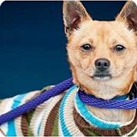 Adopt A Pet :: Woody - Poway, CA