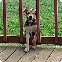 Adopt A Pet :: Ballpark - Brattleboro, VT