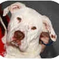 Adopt A Pet :: Homer - conyers, GA