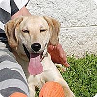Adopt A Pet :: Ida Mae - Staunton, VA