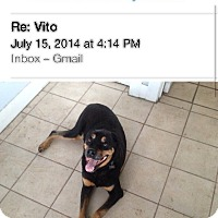 Adopt A Pet :: Vito - Gilbert, AZ