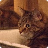 Adopt A Pet :: Curly - Watkinsville, GA