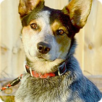 Adopt A Pet :: Cody - Delano, MN