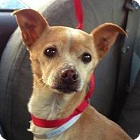 Adopt A Pet :: Guiseppe - Redondo Beach, CA