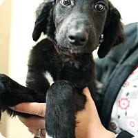 Adopt A Pet :: Mystic - Appleton, WI