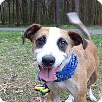 Adopt A Pet :: Ethan - Mocksville, NC