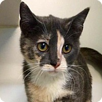 Adopt A Pet :: Canasta - Austin, TX