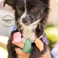 Adopt A Pet :: HUMPHREY - Inland Empire, CA