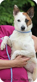 Terrier (Unknown Type, Medium) Dog for adoption in Munford, Tennessee - Marble