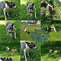 Adopt A Pet :: 1-9 Jackson - Triadelphia, WV