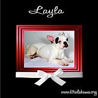 Adopt A Pet :: Layla - Alabaster, AL