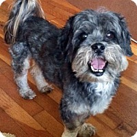 Adopt A Pet :: Benjie - St Louis, MO