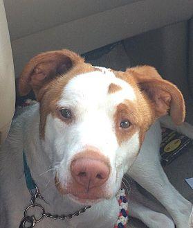 Hound (Unknown Type) Mix Dog for adoption in Crossville, Tennessee - Forrest