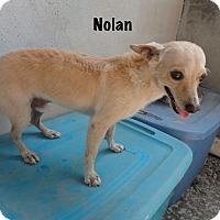 Adopt A Pet :: NOLAN - Calgary, AB