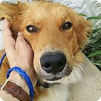 Adopt A Pet :: Garth - BIRMINGHAM, AL