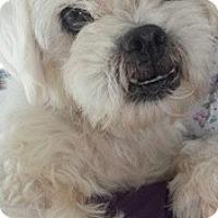 Adopt A Pet :: Alicia (in adoption process) - El Cajon, CA