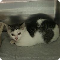Adopt A Pet :: Harper - Cody, WY
