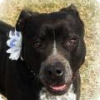 Adopt A Pet :: Ellie Mae - Franklin, TN