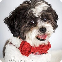 Adopt A Pet :: Orlando Bloom - St. Louis Park, MN