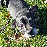 Adopt A Pet :: Buddy - Unionville, PA