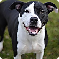 Adopt A Pet :: Brigida - Midland, MI