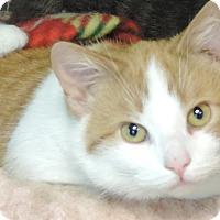 Adopt A Pet :: Dawson - Brookings, SD