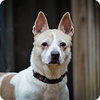 Cattle Dog Mix Dog for adoption in Jackson, Tennessee - Tangueray