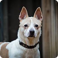 Adopt A Pet :: Tangueray - Jackson, TN