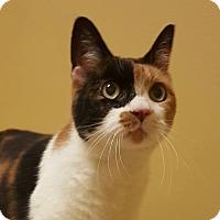 Adopt A Pet :: Topaz - St.Ann, MO