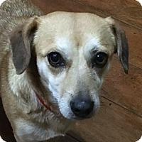 Adopt A Pet :: Peaches - Oakley, CA