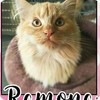 Adopt A Pet :: Ramona - Edwards AFB, CA